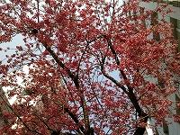 紅の花.jpg