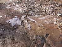 薄氷のはった畑.jpg