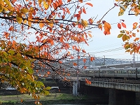 s-京都の紅葉1.jpg