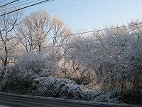 s-初雪.jpg