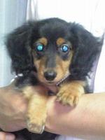 s-犬2011.06.29.jpg
