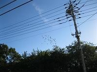 s-2012良い天気4.jpg