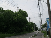 s-2013.5栗の木.jpg