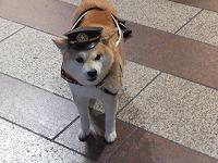 犬の消防士